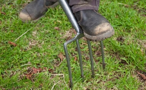 Image: Aerating lawn with garden fork